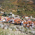 Pueblo de TORNAVACAS y cerezos en flor. Valle del Jerte. Cácere