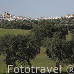 Sierra de Aracena. Huelva. España