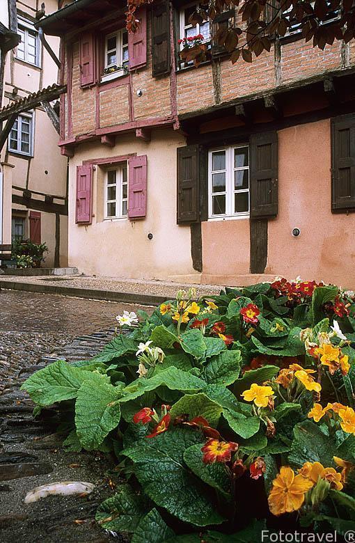 Casas en el barrio mas antiguo de Alby, llamado Castelviel, cerc
