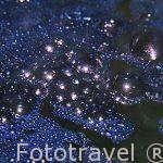 Liquido azul oscuro procedente de la mezcla de azul pastel(Blue