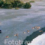 Playa de arena negra de Marine d´Albo. , cerca de la población