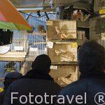 Pajarillos a la venta en el mercado. Vogelenmarkt. Ciudad de AMBERES - ANTWERPEN. Belgica