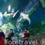 Tiburones y otros peces. Acuario Aquatopia. Ciudad de AMBERES - ANTWERPEN. Belgica
