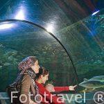 Acuario Aquatopia. Ciudad de AMBERES - ANTWERPEN. Belgica