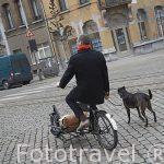 Ciclista y su perro. Ciudad de AMBERES - ANTWERPEN. Belgica