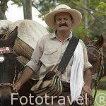 Un arriero con su carriel al hombro y su mula. Quindio. Eje cafetero. COLOMBIA