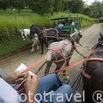 Paseo en carro por el parque agropecuario de Panaca. QUINDIO. Eje Cafetero. Colombia