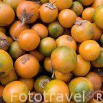 """Fruta de Lulo """"Solanum Quitoense Lam"""". Colombia. Suramerica"""