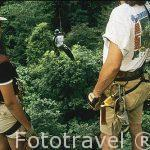 Paseando con tirolinas por la copa de los arboles selvaticos de hasta 40 metros de altura. COSTA RICA.
