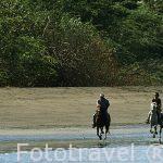 Cabalgata por Playa Potrero. GUANACASTE. Costa Rica. Centroamerica.