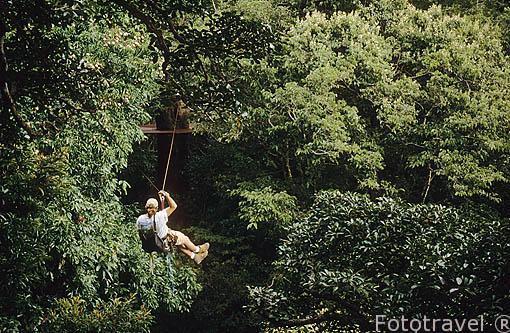 En tirolina por la copa de los arboles selvaticos de hasta 40 metros. COSTA RICA. Centroamerica.