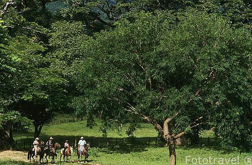Paseando a caballo por la hacienda Guachipelin. Cerca de Rincon de la Vieja. COSTA RICA. Centroamerica