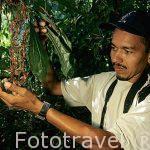 """Orquidea """"Gongora leucochila"""". Cientifico de orquideas. COSTA RICA"""