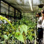 Visitantes paseando por el jardin de orquideas Lankester. COSTA RICA