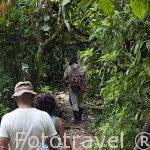 Senderos en la selva habilitados para pasear e ir de una comunidad a otra. Comunidad indigena Yorquin de habla Bri-Bri. Costa Caribe. Costa Rica