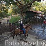 Caballos despues de una ruta. Hacienda Guachipelin. Guanacaste. Costa Rica. Centro america