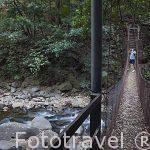 Pequeño puente colgante. Parque Nacional Rincón de la Vieja. Guanacaste. COSTA RICA.