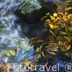 Reflejos y hojas secas en el agua de un estanque. Parque Nacional Rincón de la Vieja. Guanacaste. COSTA RICA.