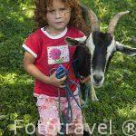 Niña peliroja y su cabra cerca de Cañas. Puntarenas. Costa Rica