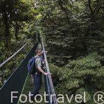 Puente colgante sobre el bosque nuboso. Theme Park. Monteverde. Costa Rica