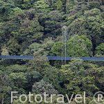 Puente colgante sobre el bosque nuboso. Theme Park. Monteverde. Provincia de Puntarenas. Costa Rica