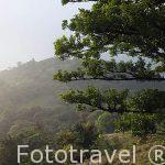 El bosque nuboso. P.Nacional de Monteverde. Puntarenas. Costa Rica