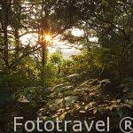 Bosque nuboso del Parque Nacional de Monteverde. Provincia de Puntarenas. Costa Rica