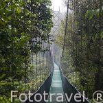 Uno de los puentes colgantes sobre el bosque nuboso primario. Empresa Sky Adventures. Cerca del Parque Nacional de MOnteverde. Costa Rica