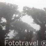 Bosque nuboso del Parque Nacional de Monteverde. Costa Rica