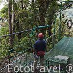 """Descenso en tirolina """"Sky Trek"""" sobre el bosque nuboso. A la izquierda una sola linea de 770mts de longitud. Empresa Sky Adventures. Cerca del Parque Nacional de Monteverde. Costa Rica"""