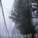 Puente colgante en el bosque nuboso. Dentro del complejo de Sky Adventures. Monteverde. Puntarenas. Costa Rica