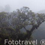 Bosque nuboso y arboles. Dentro del complejo de Sky Adventures. Monteverde. Puntarenas. Costa Rica