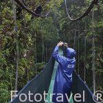 """Un visitante observando un mono congo """"Alouatta palliata"""". Parque Nacional Monteverde. Provincia de Puntarenas. Costa Rica"""