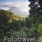 Vistas sobre el volcan Arenal y bosque. Tilaran. Costa Rica