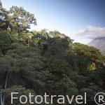 Vistas sobre el volcan Arenal y bosque desde un puente colgante. Empresa Arenal Hanging Bridges. Tilaran. Costa Rica