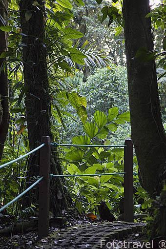 Camino entre la vegetacion del bosque. Tilaran. Costa Rica