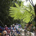 Grupo preparando el descenso de barrancos en la zona de La Fortuna. Empresa Pure Trek Canyoning. Costa Rica