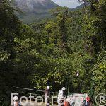 Tirolina junto al volcan Arenal. Empresa Sky Adventures. La Fortuna. Costa Rica