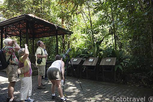 Visitantes observando aves y otros animales en el Parque Nacional Braulio Carrillo. Bosque tropical lluvioso. Costa Rica
