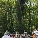 Turistas observando la naturaleza abundante. Parque Nacional Braulio Carrillo. Bosque tropical lluvioso. Costa Rica