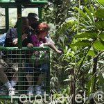 Telesilla en el Parque Braulio Carrillo. Empresa Telefericos del bosque lluvioso Atlantico. Parque Nacional Braulio Carrillo. Bosque tropical lluvioso. Costa Rica