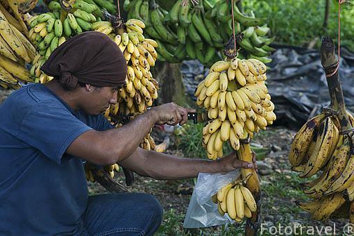 Puesto de venta de frutas en la carretera de Limon a Puerto Viejo. Costa Rica