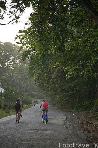 Carretera junto a la playa Chiquita al sur de Puerto Viejo direccion Manzanillo. Costa Caribe. Costa Rica
