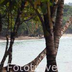 Playa Punta Uvita cerca de Puerto Viejo. Provincia de Limon. Costa Caribe. Costa Rica