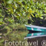 Embarcaciones de pesca en un canal junto a la playa de Manzanillo. Costa Caribe. Costa Rica