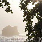 Playa Chiquita. Cerca de Puerto Viejo. Provincia de Limon. Costa Caribe. Costa Rica