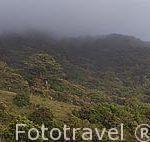El bosque nuboso. Parque Nacional de Monteverde. Puntarenas. Costa Rica
