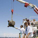 """Extracción de un capitel romano. Barco """"Princess Duda"""", lugar de trabajo de Franck Goddio. Anclado en la bahia de puerto Este ALEJANDRIA. Egipto"""