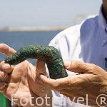 Franck Goddio mostrando un dedo de Poseidon en bronce perteneciente a una escultura de aprox 4mts todavia no encontrada. ALEJANDRIA. Egipto