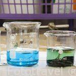 Tratamiento de limpieza de monedas con diferente tipos de quimicos como carbonato de sodio, sodio bicarbonato o E.D.T.A. Piezas descubiertas en la bahia de Puerto Este. ALEJANDRIA. Egipto